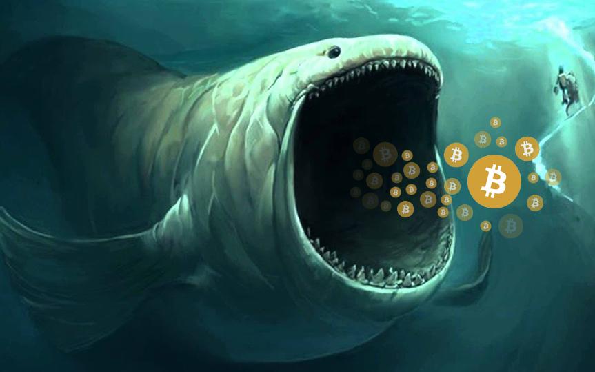 'Cá voi Bitcoin' thức giấc sau 3 năm, gom hàng ồ ạt